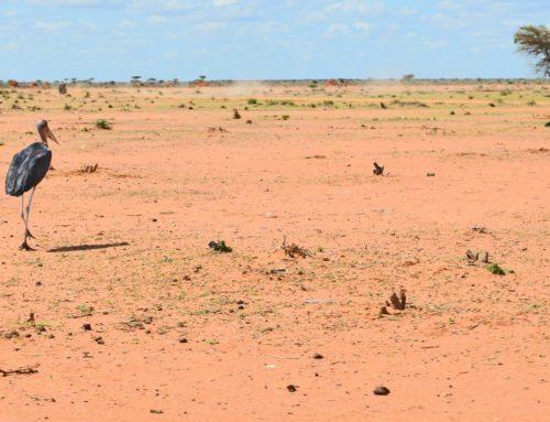 Supervivencia en Dadaab